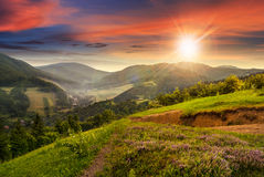 Flowers on hillside meadow with forest at  sunset Royalty Free Stock Photos