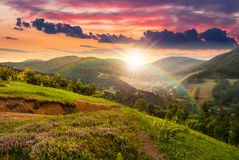 Flowers on hillside meadow with forest at  sunset Royalty Free Stock Photography