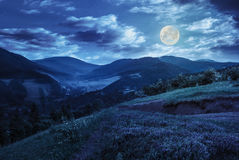 Flowers on hillside meadow in mountain at night Royalty Free Stock Photos