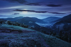 Flowers on hillside meadow in mountain at night Stock Photography