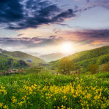 Flowers on hillside meadow in mountain at sunset Royalty Free Stock Image