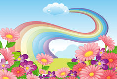Flowers at the hilltop and a rainbow in the sky Stock Photo