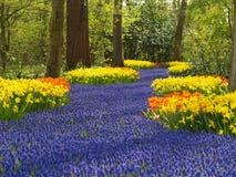 Flowers in holland. Flowers blooming in keukenhof, holland Royalty Free Stock Images