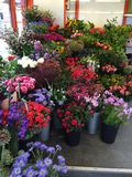 Flowers of Holland. Flowers on display from a vendor in Amsterdam Stock Image