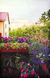 Flowers on the home balcony. Gardening at home, balcony in springtime full of blooming flowers and plants. Instagram-like retro effect added royalty free stock photo