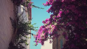 Flowers at home. Houses in Cadaques, a tipical and beautiful town in catalonia & x28;spain& x29;. In this picture you can see the flowers, both sides of the stock photo