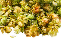 Flowers Hop Stock Photography