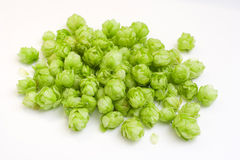 Flowers of hops stock images