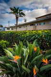 Flowers and hotel in Laguna Beach  Stock Photos