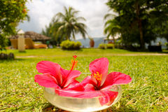 Flowers in Hotel at tropical beach resort Stock Photos