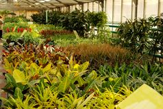 Flowers in hothouse. A view of flower seedlings and plants growing in a hothouse stock image