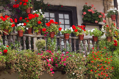 Flowers in a house. Balcony with flowers in a typical house Cantabra Royalty Free Stock Photo
