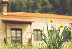 Flowers and house Royalty Free Stock Image