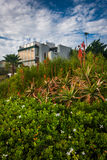 Flowers and house on a cliff, at Crescent Bay Point Park, in Lag Stock Images
