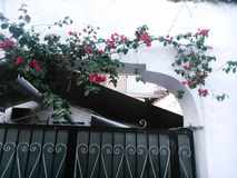 Flowers. In a house in Corfu Stock Photography