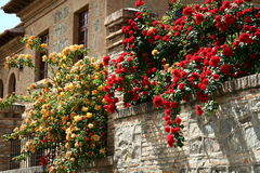 Flowers on the house wall Royalty Free Stock Image