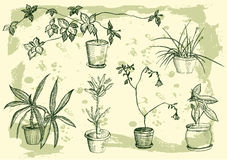 Flowers, houseplant, sweet home Royalty Free Stock Image