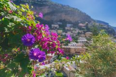 Flowers and houses on mountains in the town of Positano, along the Amalfi Coast, Italy stock image