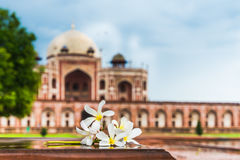 Flowers and Humayun`s Tomb Stock Image