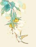 Flowers and humming-bird Stock Photo