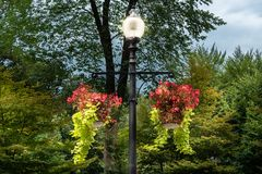 Flowers hung on light post at Boston Commons Park. Shot in 2018 royalty free stock photo