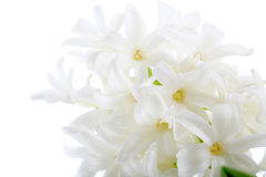 Flowers of a hyacinth Royalty Free Stock Photography