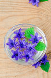Flowers hyacinth in a bowl with water Stock Photo