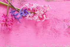 flowers hyacinths on wooden background Stock Image