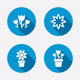 Flowers icons. Bouquet of roses symbol Royalty Free Stock Photography