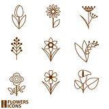 Flowers icons. Floral  and flowers icons.Vector illustration Royalty Free Stock Photos