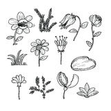 Flowers icons set, vector illustration Royalty Free Stock Image