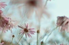 Flowers II Royalty Free Stock Image