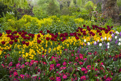 Flowers iin St. James's Park in London Stock Images