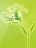 Flowers illustration Royalty Free Stock Photography