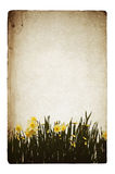 Flowers illustration on old grunge background Royalty Free Stock Photos