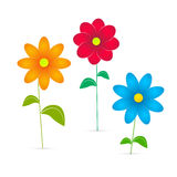Flowers Illustration. Vector Flowers Illustration Isolated on White Background Royalty Free Stock Photo
