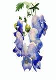 Flowers illustration Royalty Free Stock Image