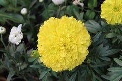flowers image стоковое изображение