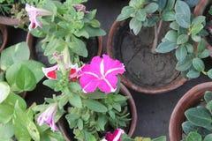 flowers image стоковая фотография rf