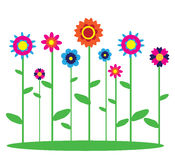 Flowers image. Nice colourful spring flowers grow Stock Photography