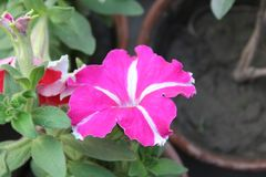 Flowers images. Capture by Canon camera royalty free stock photography