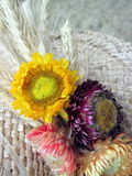Flowers of immortelle Royalty Free Stock Photos