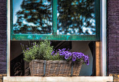 Free Flowers In Amsterdam Winddow Stock Image - 95286731
