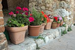 Flowers In Flower Pots In Front Of A Wall In Italy Stock Image