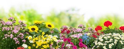 Free Flowers In Garden Stock Photo - 73168390