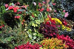 Flowers In Gardens