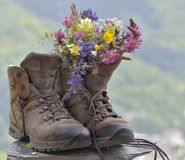 Flowers In Hiking Shoes Royalty Free Stock Photos