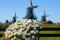 Flowers In Holland Stock Images