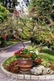 Flowers In The Beautiful ,exotic Garden In Monaco Stock Images