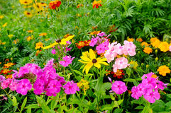 Free Flowers In The Garden Stock Image - 32917021